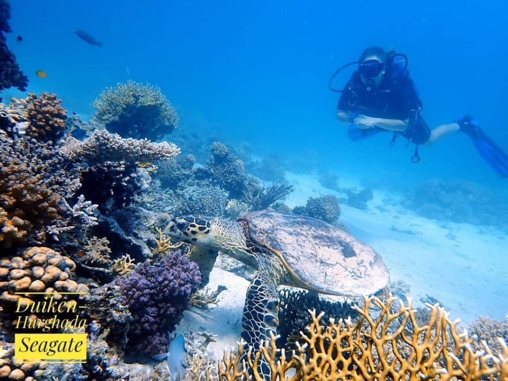 Seagate Hurghada Diving - Red Sea - Egypt - turtel - Open Water Dive Course